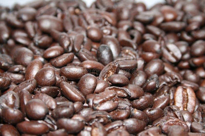 Coffe豆 免版税库存照片