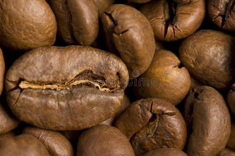 Coffe imagem de stock royalty free
