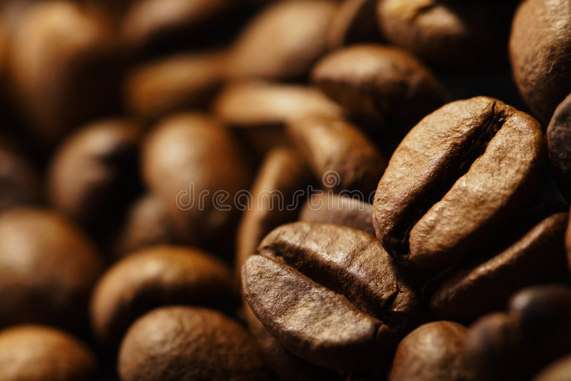Coffe bean royalty free stock photo