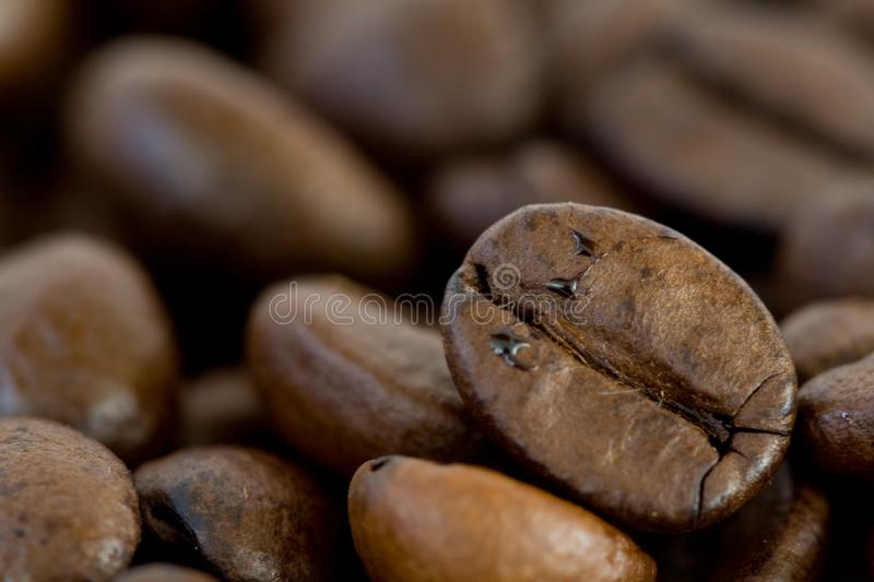 Coffe bean closeup. Grains of brown coffe. Closeup of some grains of coffe royalty free stock images