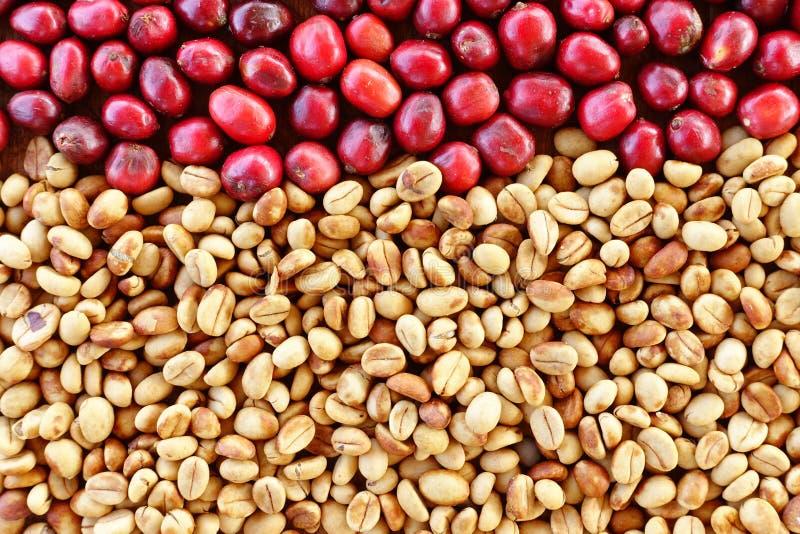Download Coffe Fasole I świeże Jagod Fasole Zdjęcie Stock - Obraz złożonej z plantacja, jedzenie: 65225946