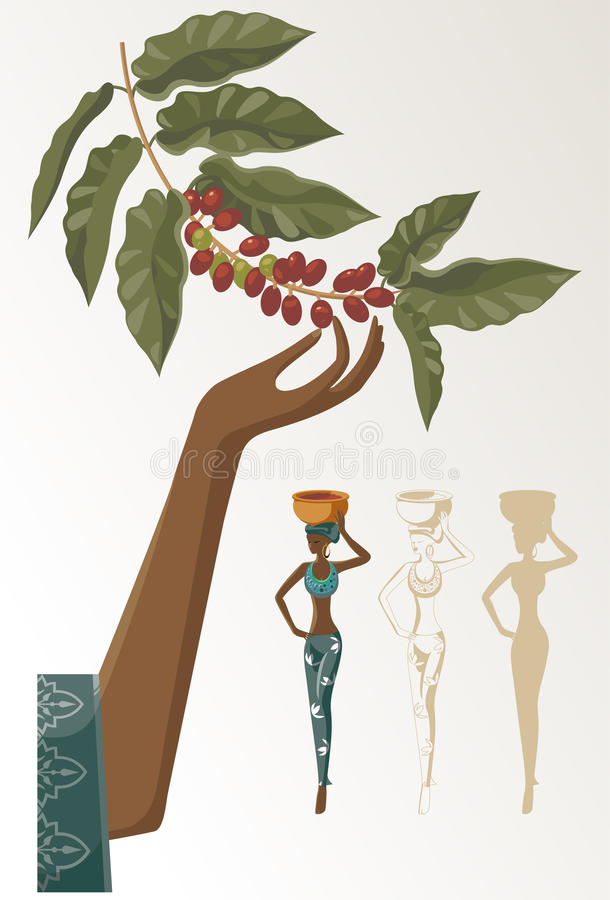 Coffee. Woman takes the crop of coffee stock illustration