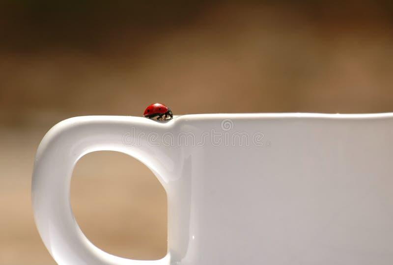 Coffee addicted royalty free stock image