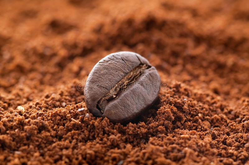 Download Coffee Bean stock photo. Image of ecological, java, bean - 16908146