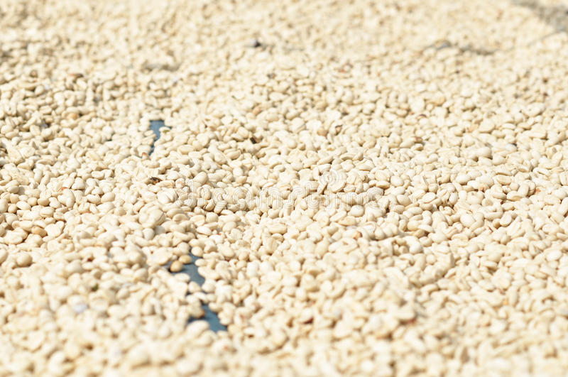Download Coffee bean stock image. Image of background, grained - 23610735