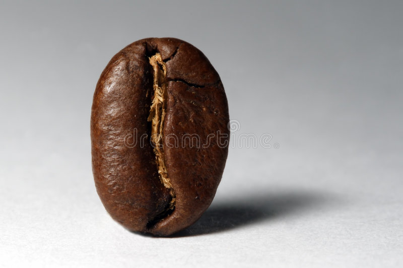 Coffee bean. Isolated Coffee bean close-up stock image