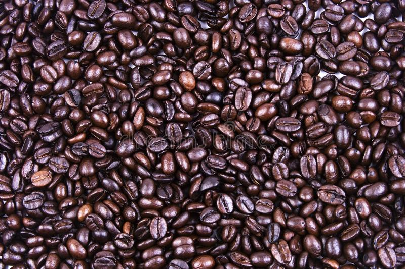 Coffee Bean Close Up royalty free stock photography