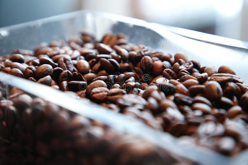 coffee bean for fresh coffee royalty free stock photos