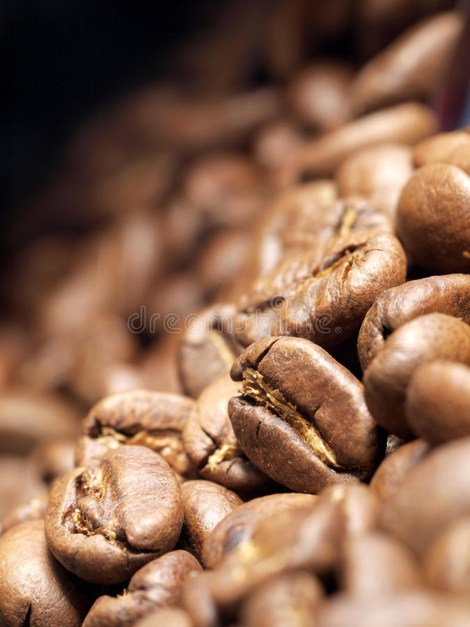 Free Coffee Beans Royalty Free Stock Images - 10953409