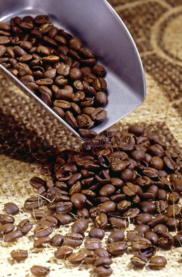 Free Coffee Beans Royalty Free Stock Images - 17252039