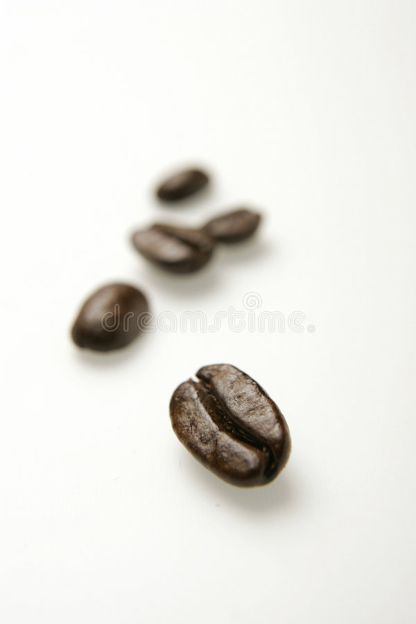Coffee beans. Close-up of coffee beans on white background stock images