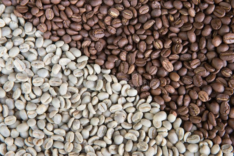 Coffee beans background group of green and roasted arabica coffee beans concept of coffee state and agriculture. Coffee beans background.Group of green and royalty free stock photos
