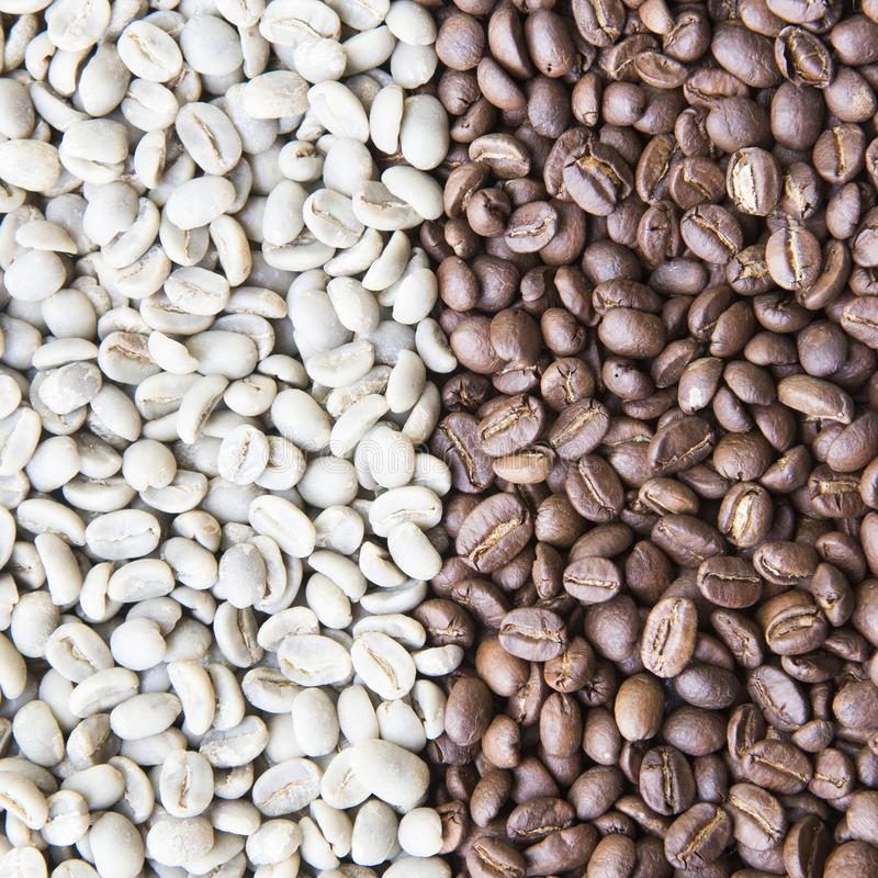 Coffee beans background group of green and roasted arabica coffee beans concept of coffee state and agriculture. Coffee beans background group of green raw and royalty free stock photo