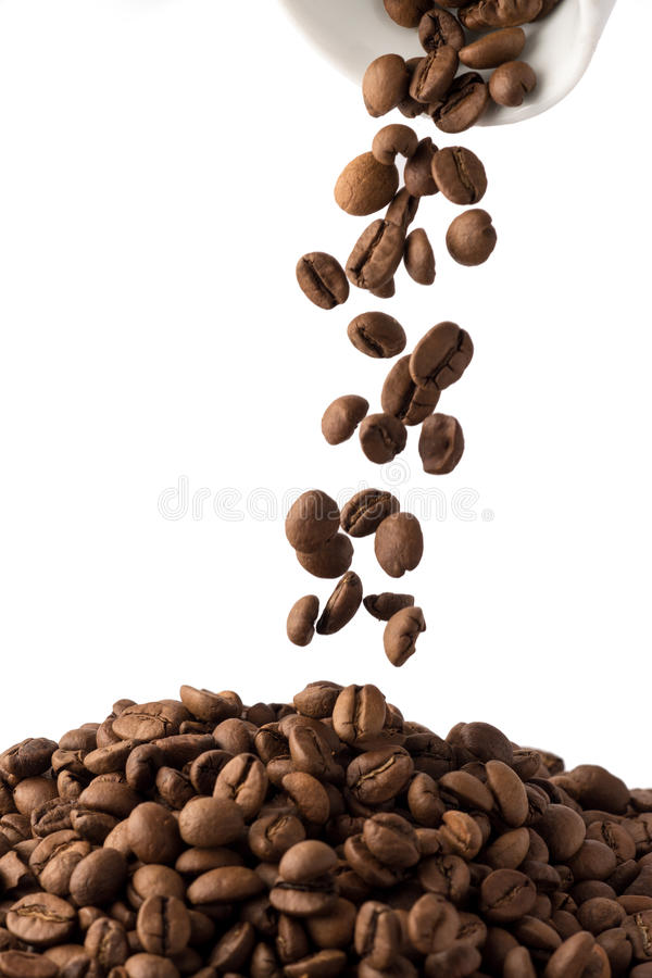 Coffee Beans in cup. Roasted brown coffee beans on white isolated background in small espresso coffee cup royalty free stock image