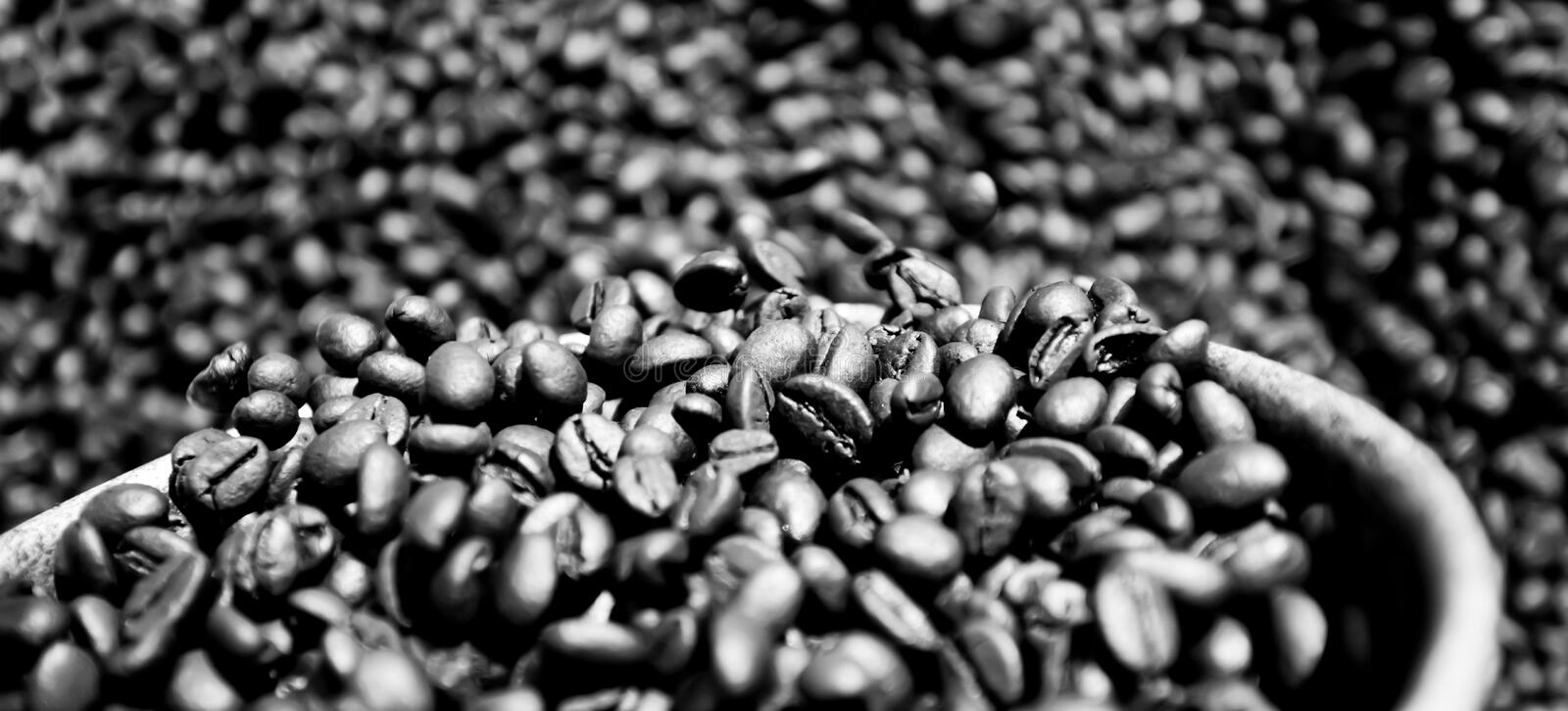 Coffee beans fresh roast on silver scoop. Abstract textures of roasting coffee beans, organic coffee. Close-up. Selective focus. Full frame stock image