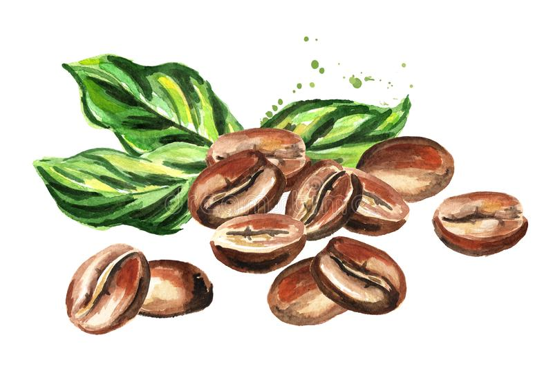 Coffee beans with green leaves composition. Watercolor hand drawn illustration isolated on white background. royalty free illustration