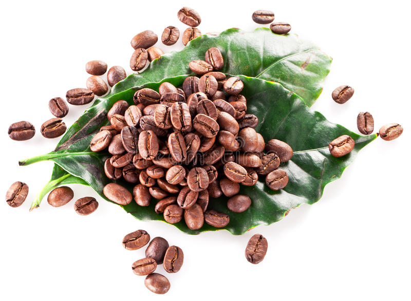 Coffee beans on leaf. royalty free stock images
