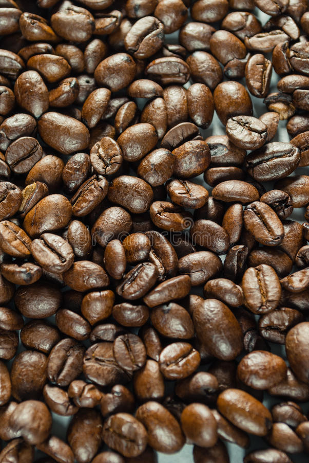 Coffee beans on Neutral Gray Background. Dark Roast Coffee. Dark Roast Coffee on neutral Background royalty free stock photo