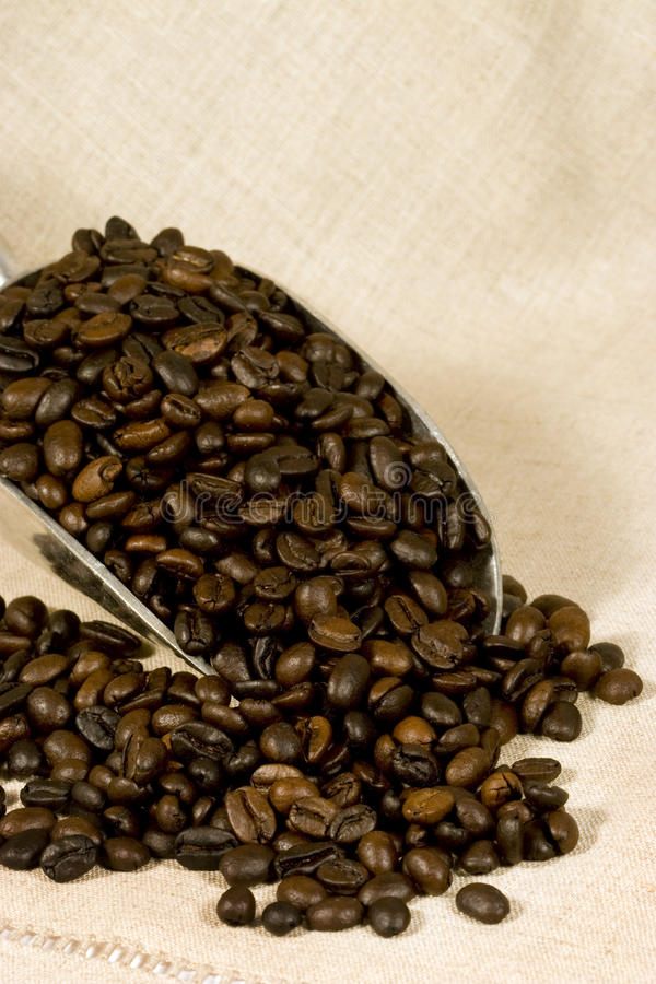 Coffee Beans in Scoop. Whole dark roasted coffee beans in metal scoop with linen fabric background stock photo