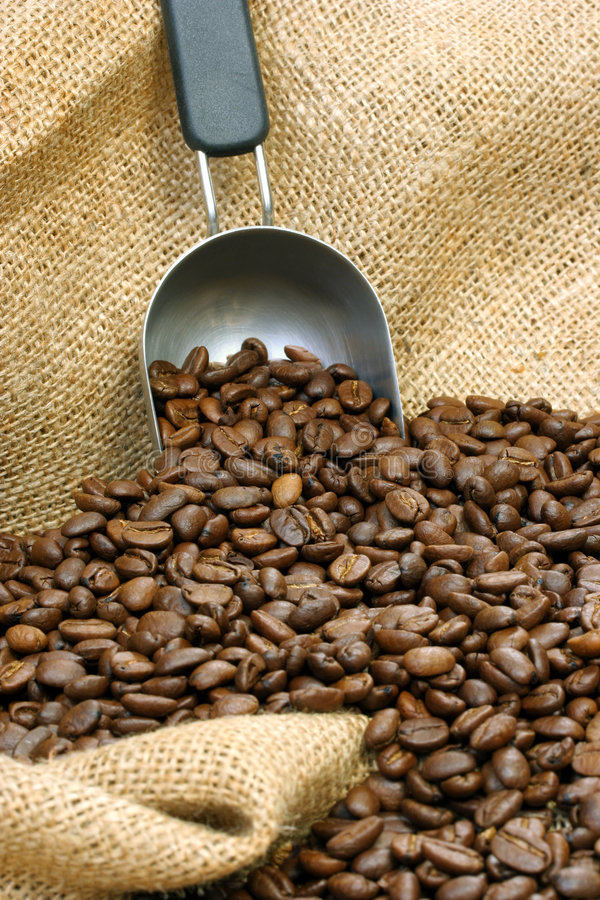 Coffee Beans and Scoop stock photo