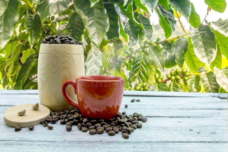 Coffee beans with seeds royalty free stock image