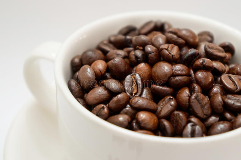 Coffee beans. In white cup stock photography