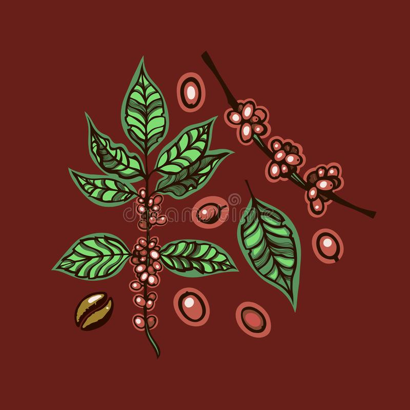 Coffee. Botanical illustration. Set of berries, branches and leaves. stock illustration