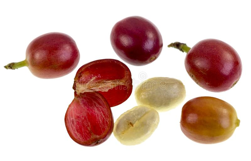 Coffee Cherry Fruit Anatomy. View of a fresh coffee cherry fruit anatomy with the outer section composed by the skin and pulp, in red in the image, and the inner royalty free stock image