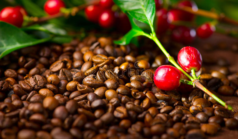 Coffee. Cup of coffee with the ripe coffee berries stock images