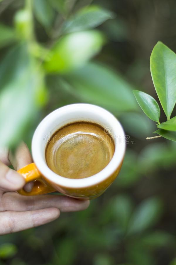 Coffee cup with green leaves background stock image