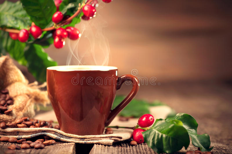 Coffee. Cup of hot coffee closeup and real coffee beans royalty free stock images