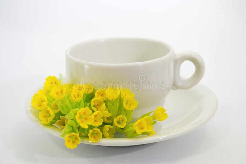 Coffee cup with Primula veris flower stock images
