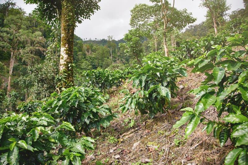 Coffee fertilizer on farm. In mountain background royalty free stock photos