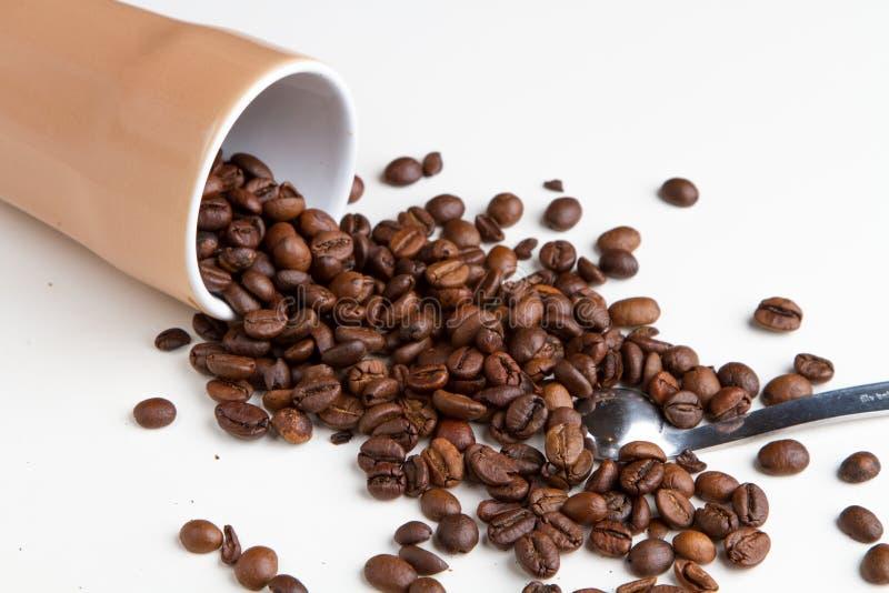 Coffee grain royalty free stock photography