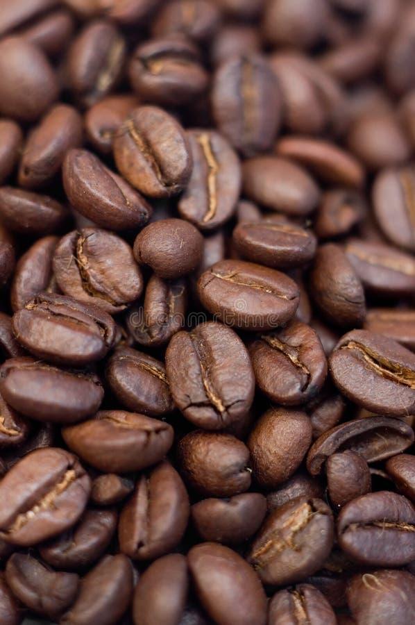 Coffee grains Coffea stock photography