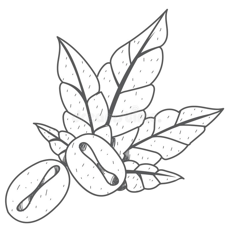 Coffee grains and green leaves outline drawing.  stock illustration