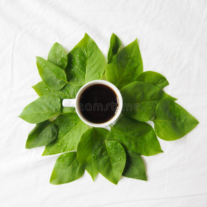 Coffee and leaves stock photography
