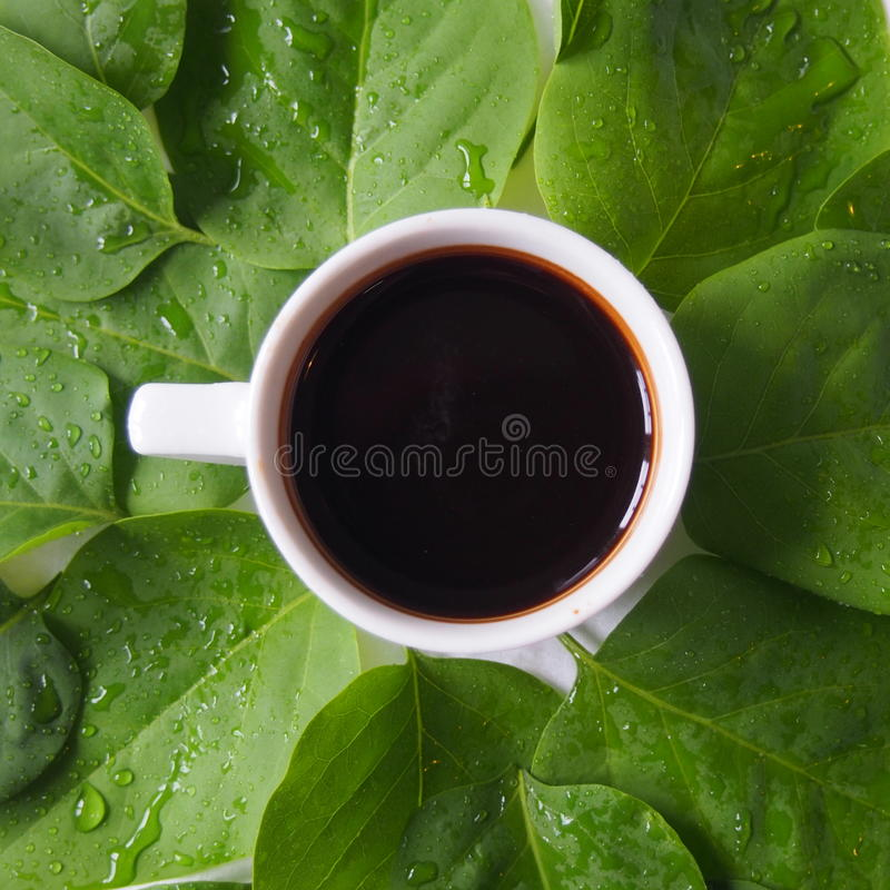 Coffee and leaves stock images