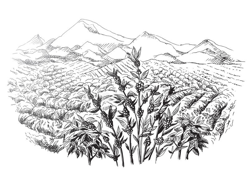 Coffee plantation landscape royalty free illustration