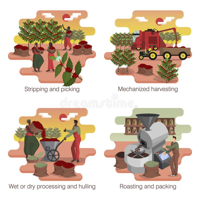Free Coffee Production. Process And Manufacturing Stages. Illustration Set Stock Photos - 164999753