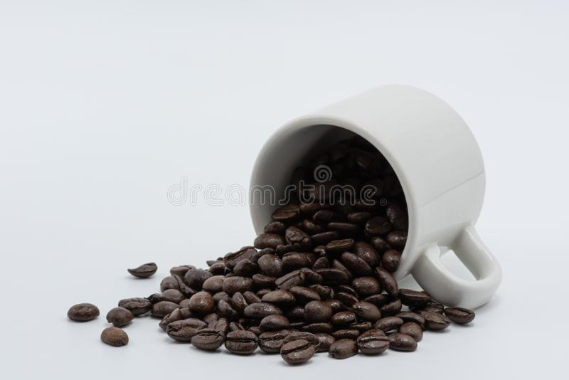 Coffee seed in a coffee cup. Coffee seed in a white ceramic cup on a white background stock photography