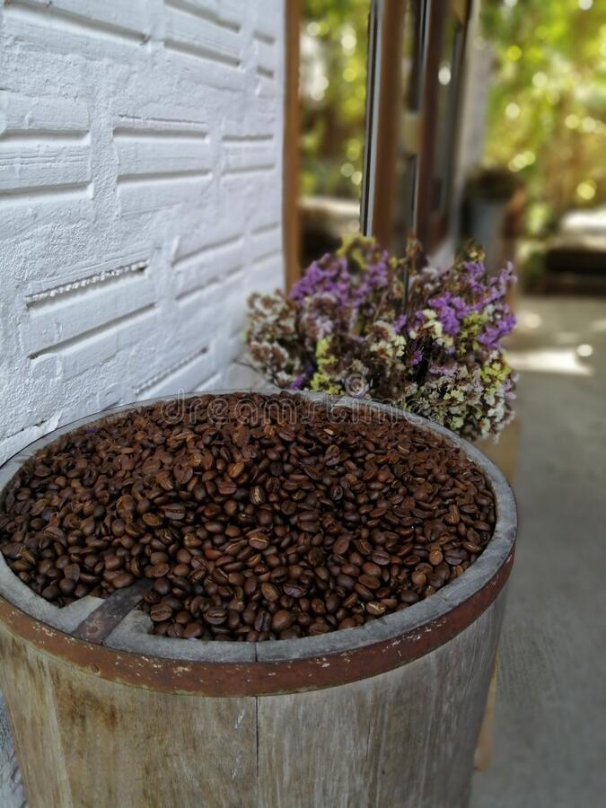 Coffee seeds in bucket royalty free stock images