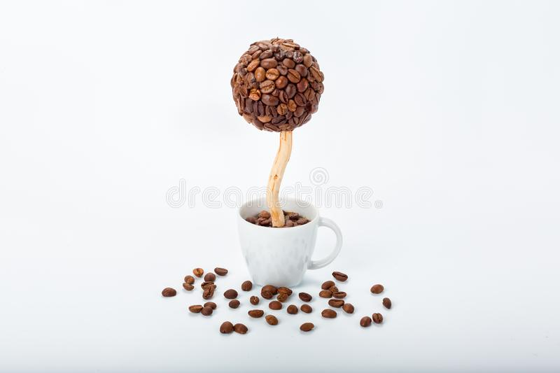 Coffee tree in a cup stock photos