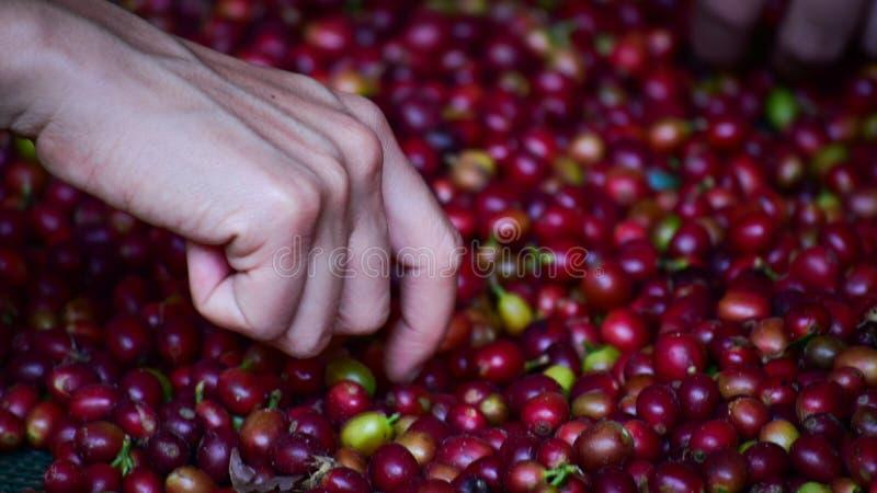 Coffee work royalty free stock photo