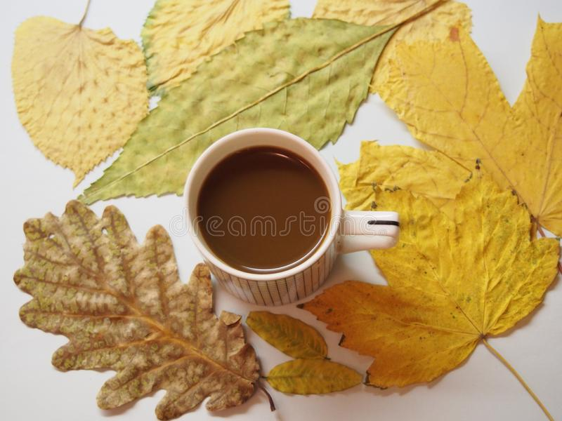 Coffee and yellow leaves royalty free stock photos