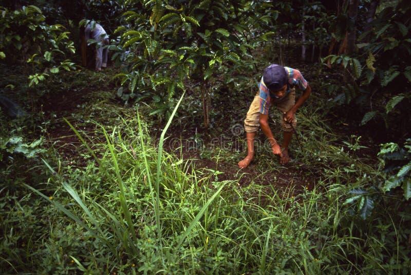 Coffeefarmers Panama de Campesino photos stock