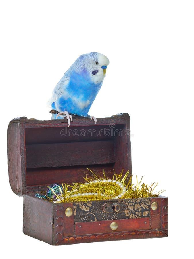 Coffre de trésor avec le perroquet de pirate image stock