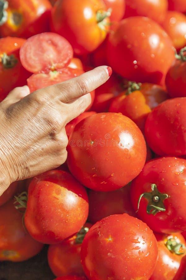 Coger el tomate orgánico fresco fotos de archivo libres de regalías