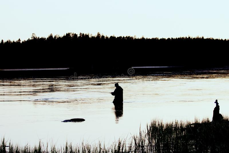 Cogida de color salmón con flyfishing en el río del norte limpio foto de archivo libre de regalías