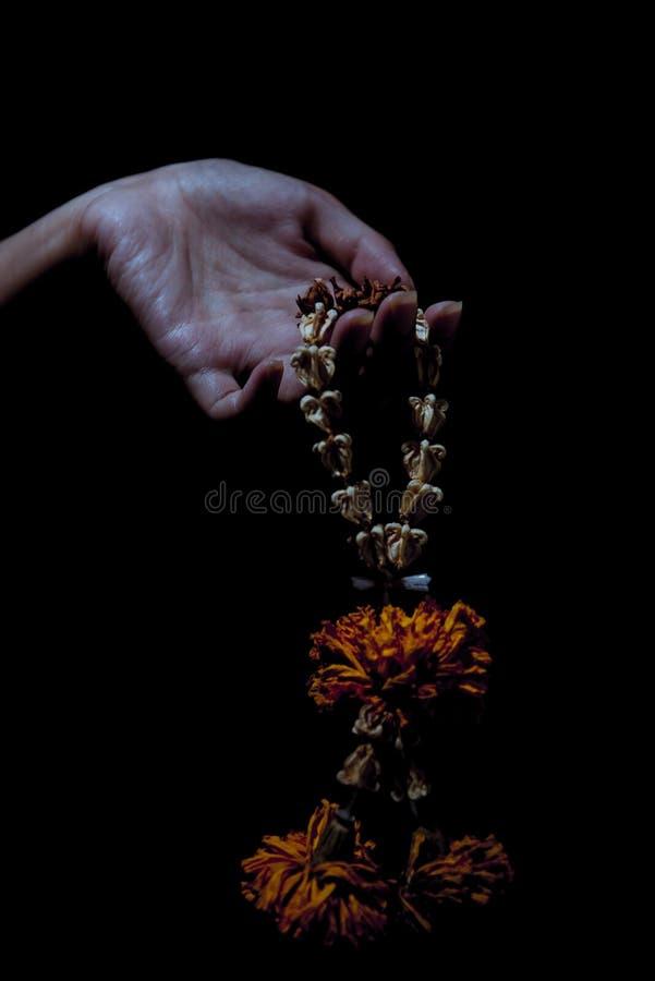 Cogida de la flor secada fotografía de archivo libre de regalías